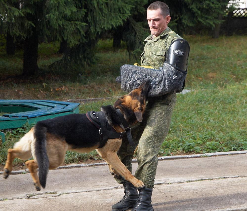 dog-mvd1007